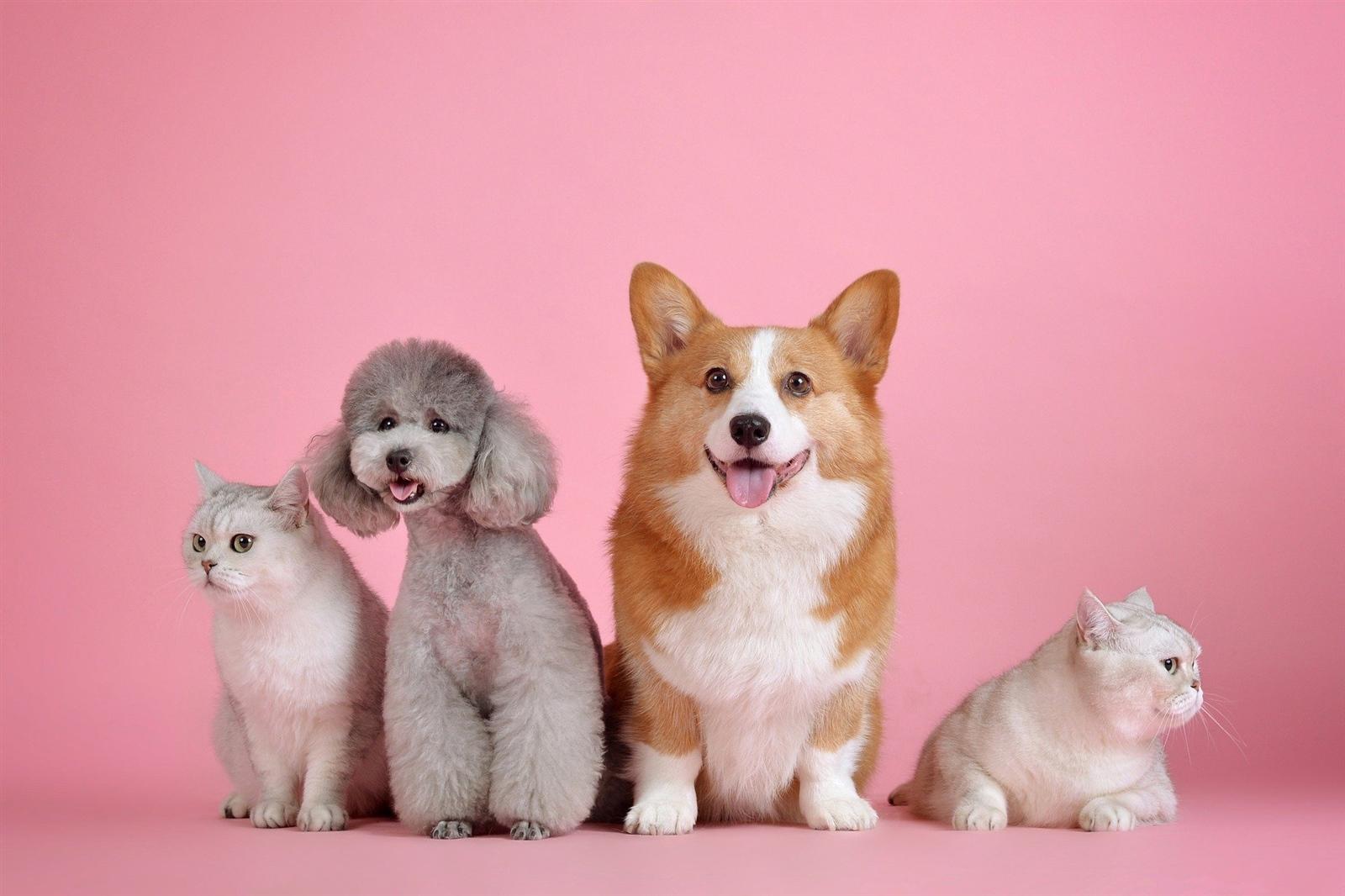 租屋快課力【房客篇2】限制養毛小孩?教您如何與房東談租屋養寵物